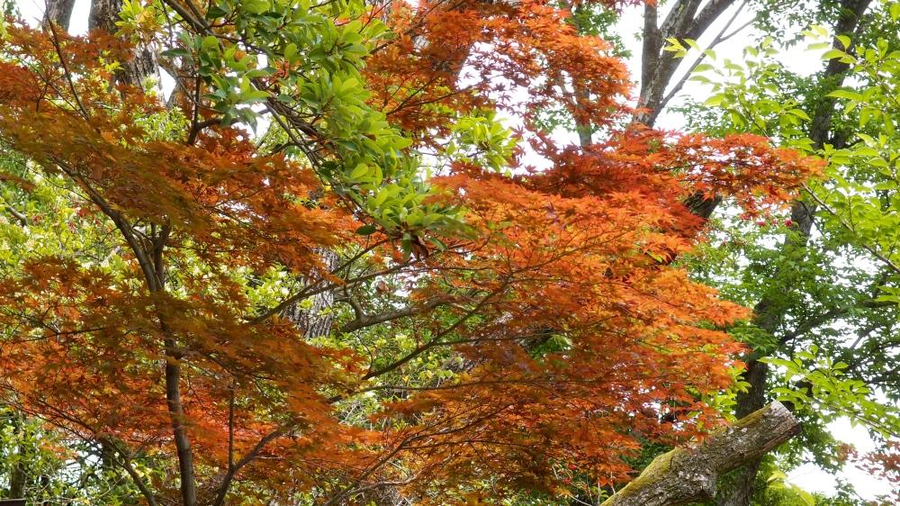 Yasaka-jinja, Kyoto, Japan