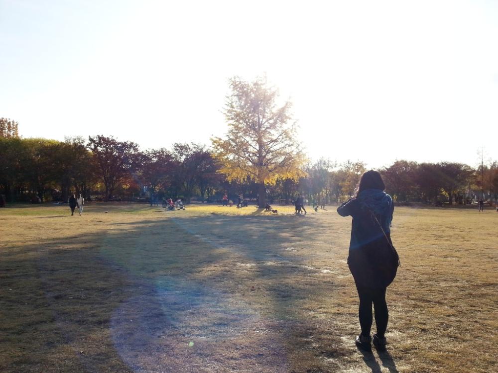 Travel Photographer | Autumn 서울숲 (Seoul Forest) South Korea