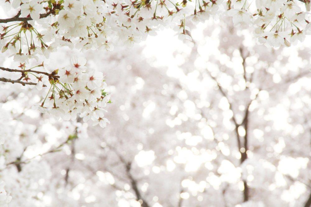 Freelance Travel Photographer   Spring in Yeongdeungpo Riverside Trail (영등포수변둘레길), South Korea.