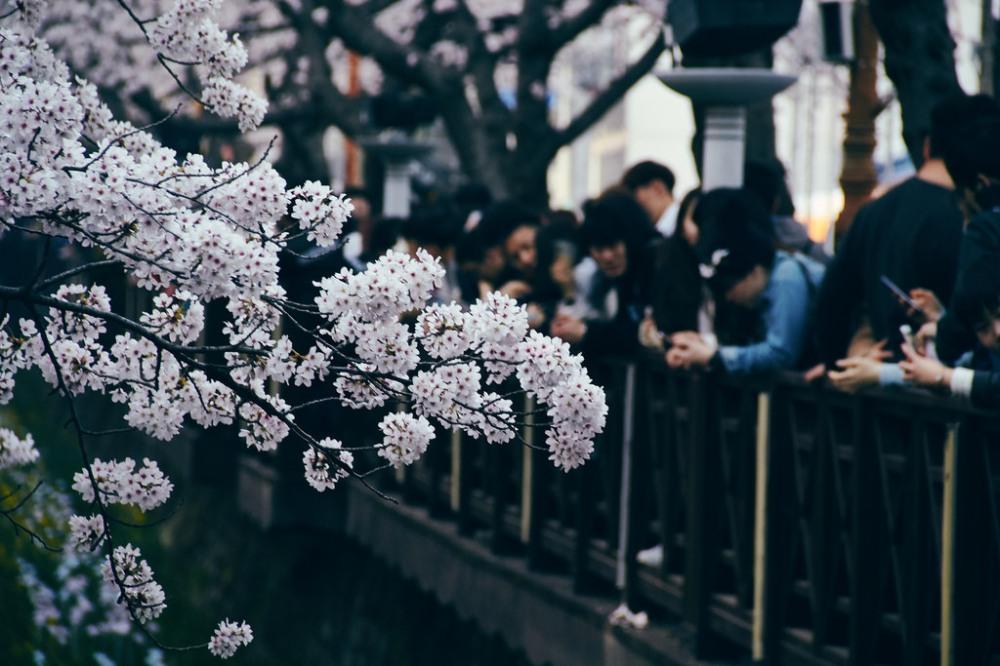 Travel Photographer | Jinhae Cherry Blossom Festival South Korea