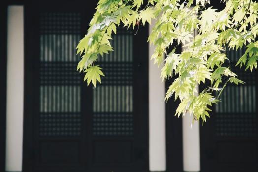 Travel Photographer | 길상사 (Gilsangsa) Seoul South Korea