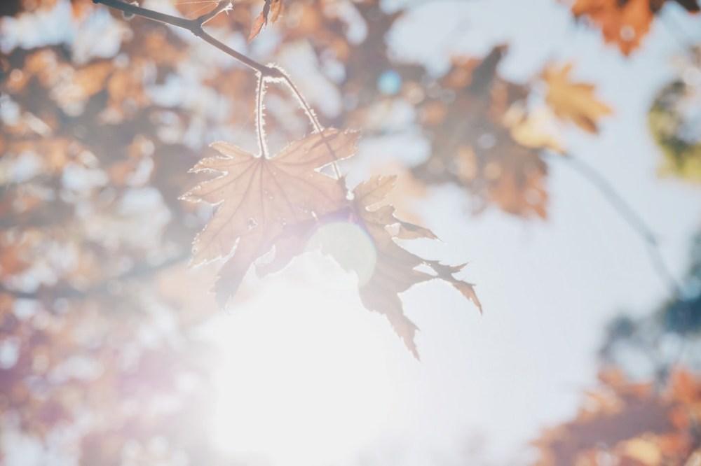 Travel Photographer | Autumn Changdeokgung Seoul South KOrea