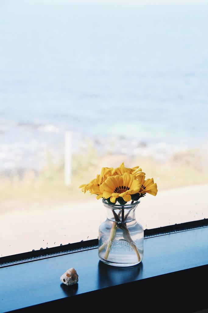 Lifestyle Photographer   Spring in Udo Maritime Park (Udo Island) Jeju Island South Korea