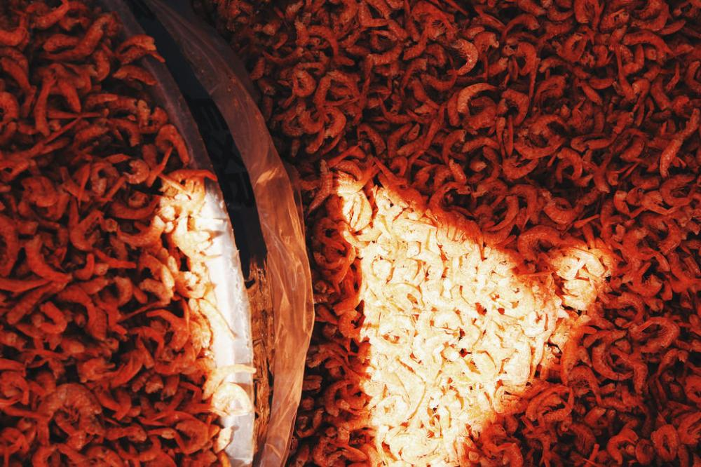 Travel Food Photographer | Dried shrimps Busan Jagalchi Market (부산 자갈치시장) South Korea