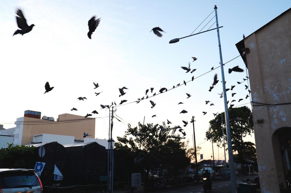 Travel Photographer   Pigeons Georgetown Penang Malaysia