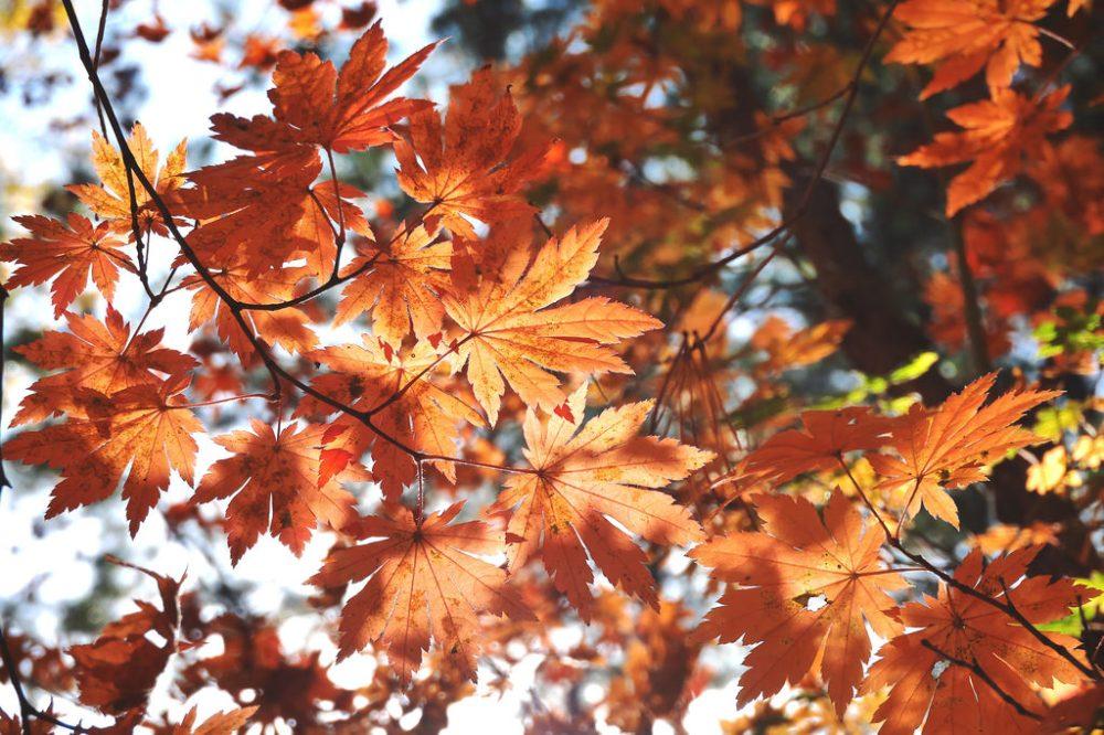 Travel Photographer | Autumn Nami Island (남이섬) South Korea