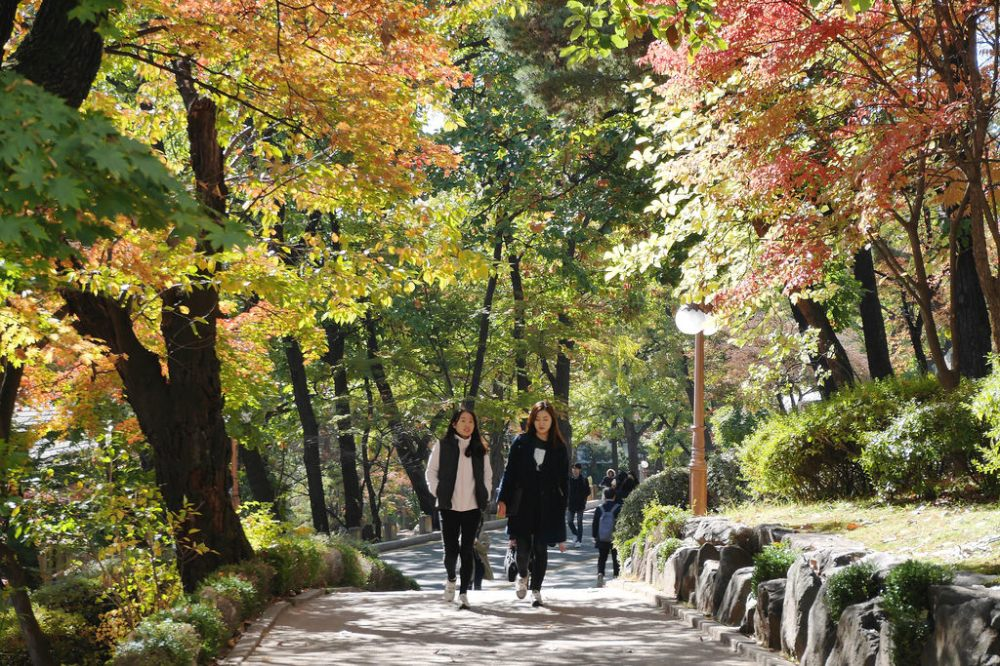 Autumn in Yonsei University, Seoul.